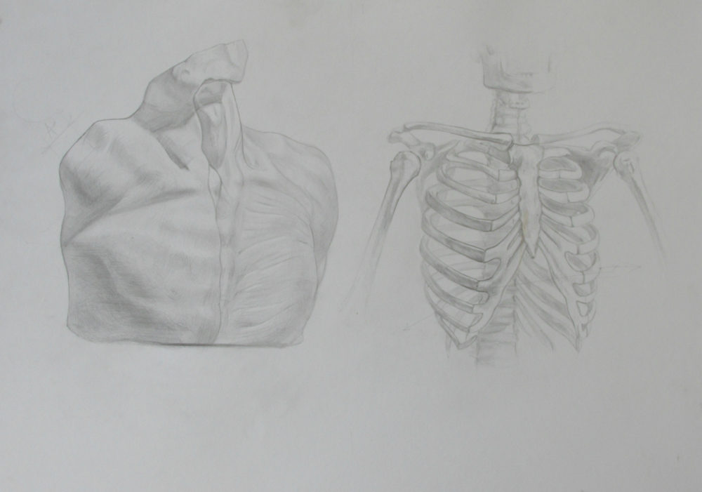 Anatomical drawing